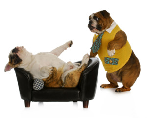los angeles dog behaviorist treating a dog lying on a couch