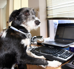 dog at computer looking up dog training links